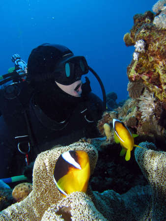A diver opening his mouth to imitate the clownfish in front of him. Stock Photo - 2483305