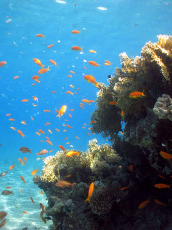 Underwater photograph of a coral reef in the Red Sea Stock Photo - 5486476