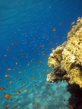 Underwater photograph of a coral reef in the Red Sea Stock Photo