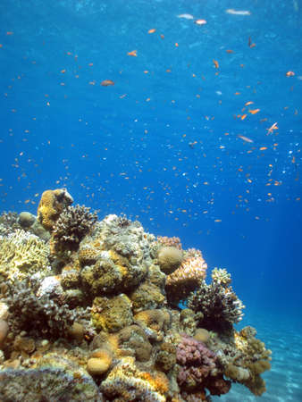 Underwater photograph of a coral reef in the Red Sea photo