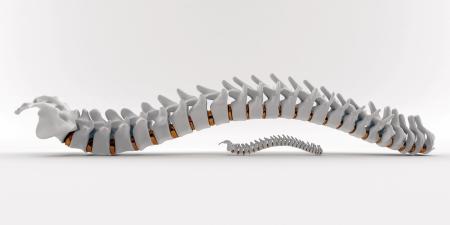 columna vertebral humana: Columna blanca y dorada de cerca sobre fondo blanco