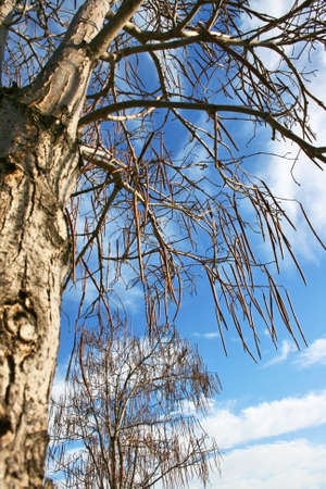 shurb: Winter branches against blue-cloudy sky. Stock Photo