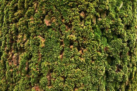 Moss texture on old tree bark.