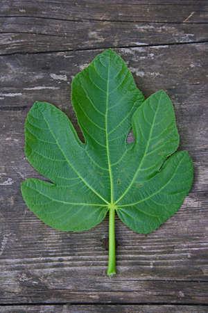 Fig Leaf On Wooden Background photo