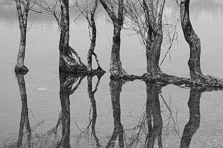 Trees and their reflections on Sapanca Lake,Sakarya,Turkey