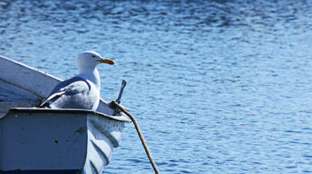 gulls: Sailing Lonely Stock Photo