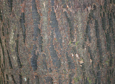 Tree Bark Texture Stock Photo - 13366739