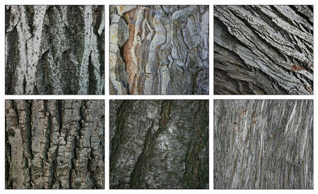 Walnut,pine,poplar,linden,plume,cypress barks textures photo