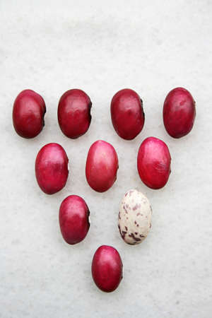 Being Different,Natural colorful bean seeds photo