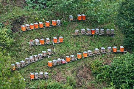 fumigador: Apicultura en tierras altas, colmenas colorido en el bosque