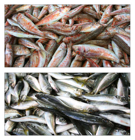 bluefish: Fishes,collage Stock Photo