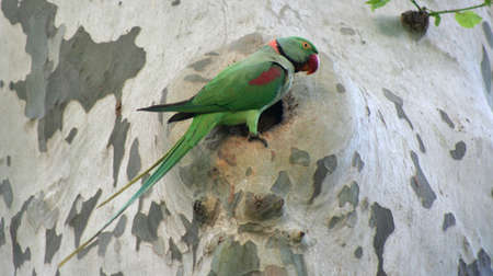 quaker: Lonely green parrot