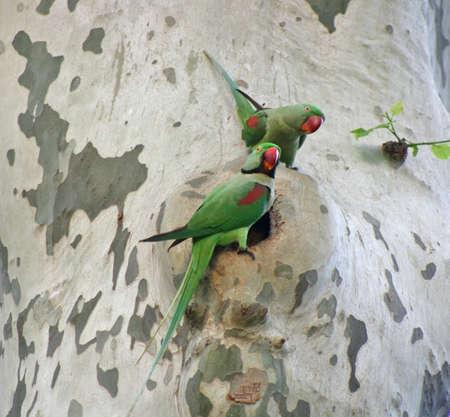 quaker: A pair of parrots in park