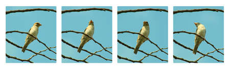 Lonely birdie on branch,collage photo
