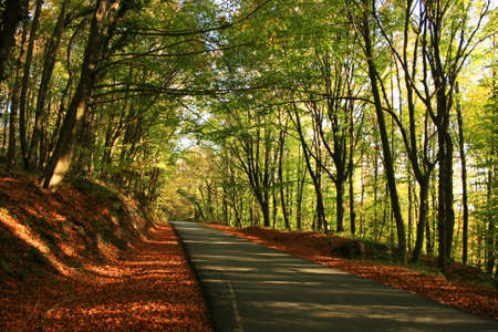 mid afternoon: Belgrad Forest in fall season ,Istanbul,Turkey Stock Photo