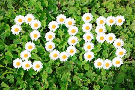 2015 with daisies on shamrocks Stock Photo - 27335624