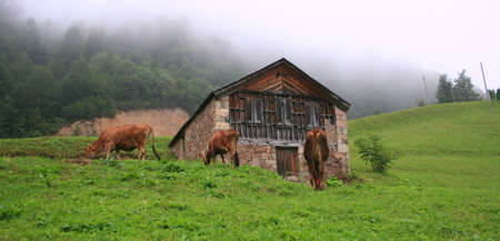 Highlands Of Turkey,Eastern Blacksea Region,Trabzon