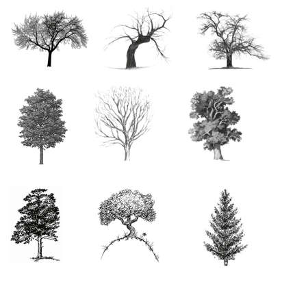 Trees ,vectoral set Иллюстрация