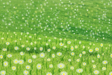 Green spring meadow background photo