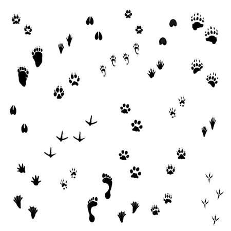 huellas de animales: Animal Tracks Foto de archivo