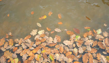 Fall leaves on lake background Stock Photo - 107217592