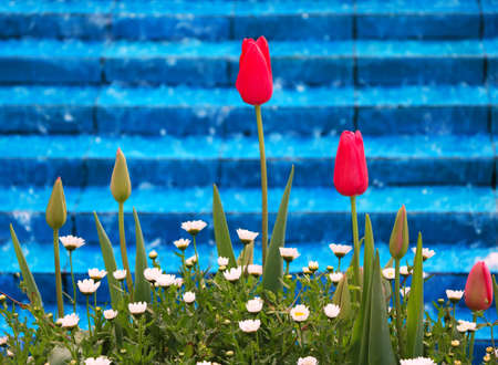 Red tulips against turquoise tiles and water in Istanbul, Turkey during tulip festival