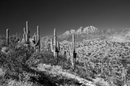Saguaros and Four Peaks Arizona photo