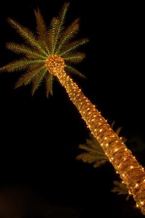 ヤシの木とクリスマスの照明 写真素材