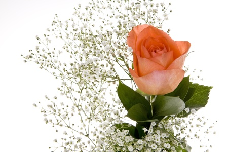 Orange Rose with Babys Breath