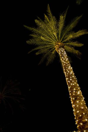 Palm tree at night wrapped with festive lights.