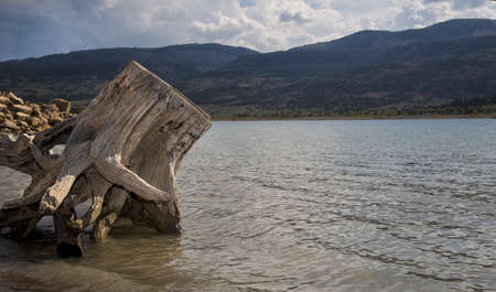 wasatch: Driftwood on the shore at Joe s Valley Reservoir Stock Photo