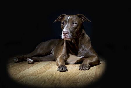 spot: Spot Light Dog Portrait