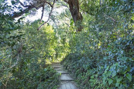 The Waikomoi hiking trail along the Road to Hana on Maui Island in Hawaii.