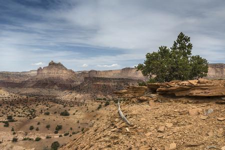 san rafael swell: Colorful Reds Canyon in the San Rafael Swell near Greenriver Utah.