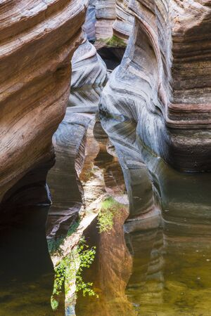 Colorful slot canyon in Zion National Park in Utah, USA photographed to show reflections.