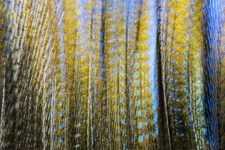 An abstract of quaking aspens in fall created from multiple exposures. 写真素材 - 99858016