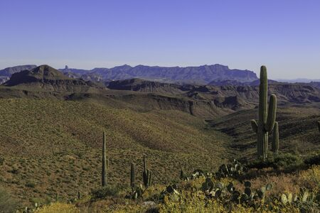 Sonoran desert near Phoenix Arizona with Saguaro Cacti and the Superstition Mountains and Weavers Needle in the distance. Imagens