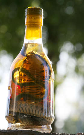 Snake Wine from Vietnam