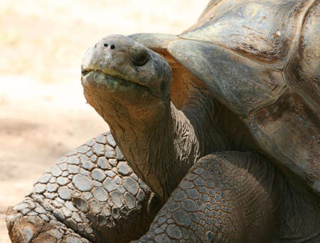 This old tortoise wants to be left alone. He is ancient and will probably die soon