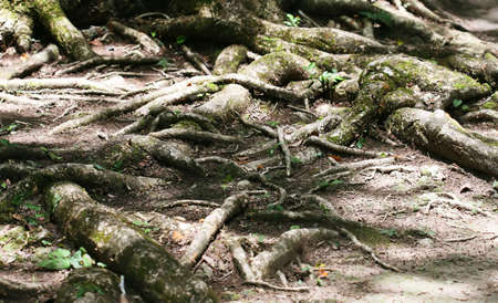 Tangled roots wind around the jungle floor