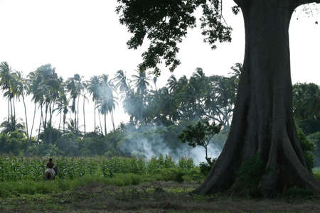 A field ablaze in central america where slash and burn farming methods are commonly practiced