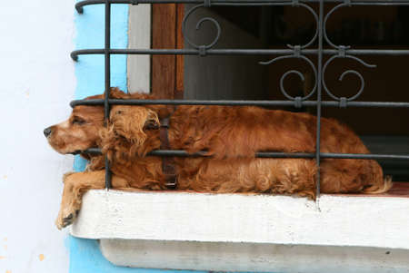 doggie in the window Reklamní fotografie