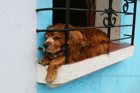 A dog rests in a window photo