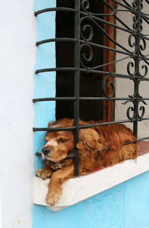 restrained: A dog behind bars