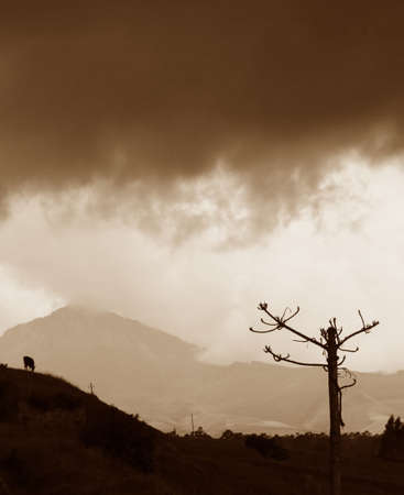 A lone goat grazing under stormy clouds high in the central mountains of Ecuador photo