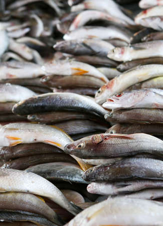 fishy: A hhuge pile of fresh fish for sale in the market Stock Photo