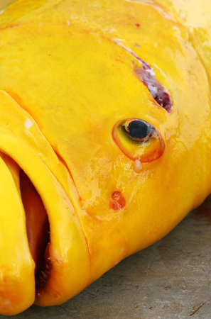 A large yellow fish caught on the island of  Cruz, Ecuador photo