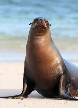 A Sea Lion poses for the tourists on the island of Santa Fe, Ecuador
