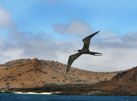 frigate: A frigate bird soars high over the ocean with a beautiful beach in the background Stock Photo