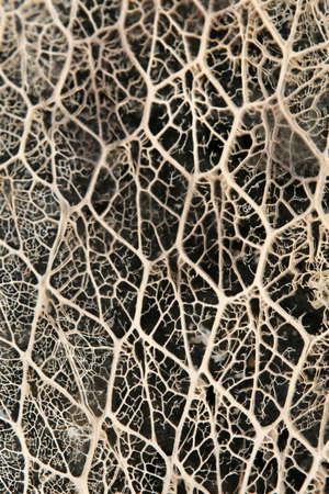 The complex skeleton of a cactus plant Reklamní fotografie